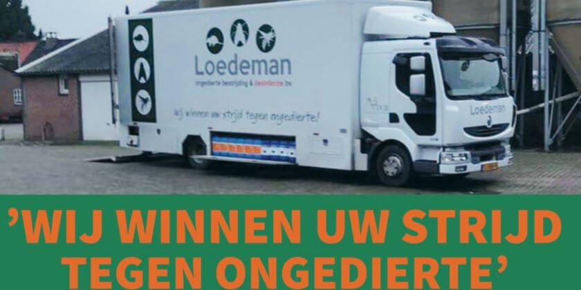 loedeman advertentie